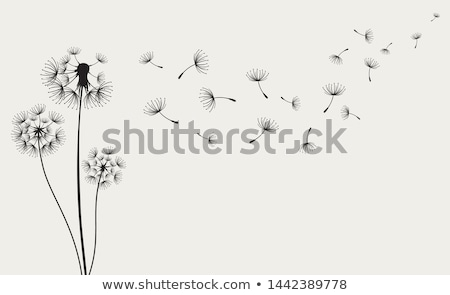 Dandelion Flower Seeds Stock photo © rhamm