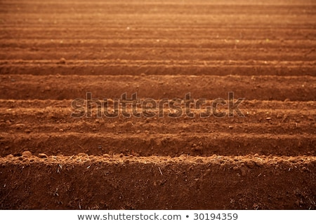 Ploughed red clay soil agriculture fields  Stock photo © lunamarina