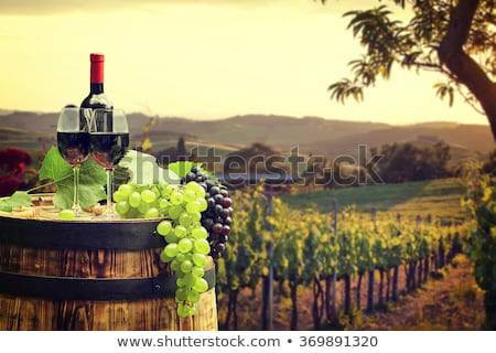 Wooded hill Tuscany Stock photo © w20er