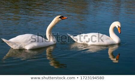 Paar water oppervlak meer liefde Stockfoto © stevanovicigor