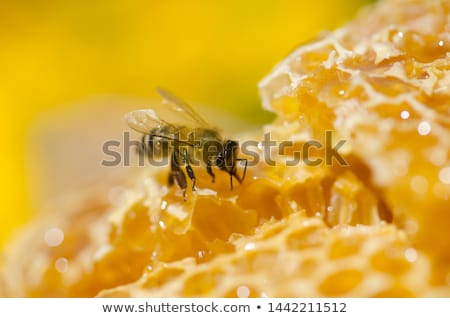 Złoty ul streszczenie metal polu internetowych Zdjęcia stock © shawlinmohd
