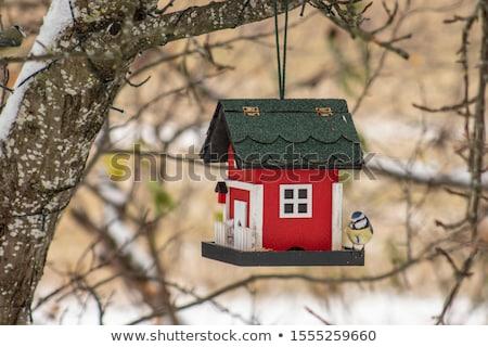 miniature · deux · oiseaux · bois · maison · volée - photo stock © kimmit