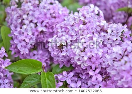 растущий природы лет день цветок цветы Сток-фото © OleksandrO