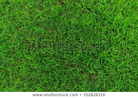 Green grass from above stock photo © entazist