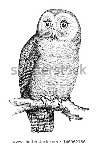 декоративный изолированный совы филиала глаза дизайна Сток-фото © ulyankin
