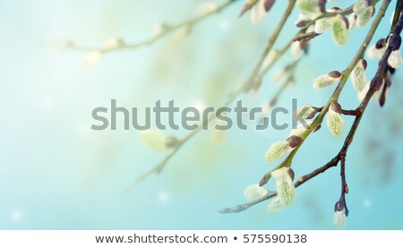 green leaves of willow at spring Stock photo © Mikko