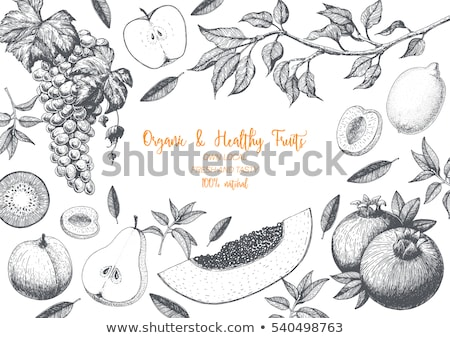 киви белый изолированный иллюстрация Сток-фото © ConceptCafe