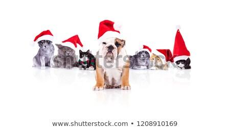 Noel · ağaç · şube · çam · doğal · yalıtılmış - stok fotoğraf © feedough