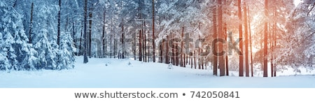 Christmas Tree in Snow. Winter frozen background Stock photo © mythja