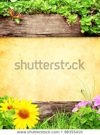 caterpillar with wooden banner stock photo © colematt