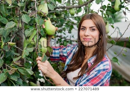 Фермеры · человека · женщину · груши - Сток-фото © robuart