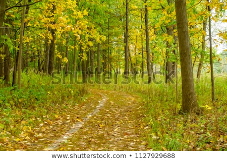 Leafy trail through woods Stock photo © jsnover