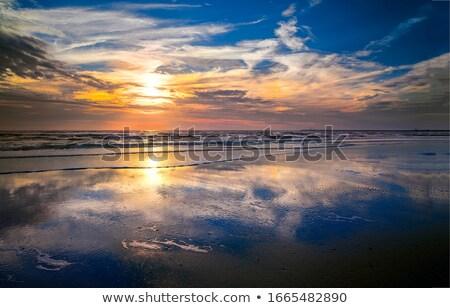 orman · zemin · doğal · manzara · güney - stok fotoğraf © imaster