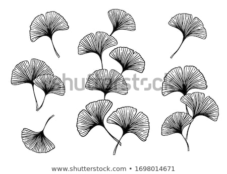 ginkgo branch with leaves, vector Stock photo © beaubelle