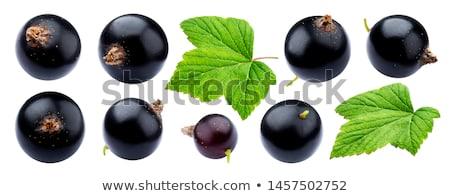 Sweet black currant with leafs Stock photo © Masha
