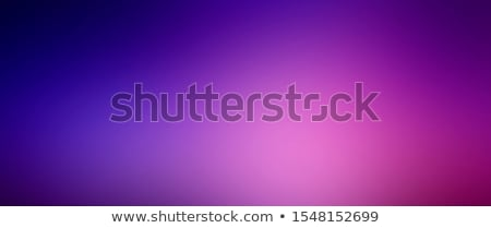 purple lilacs stock photo © taden