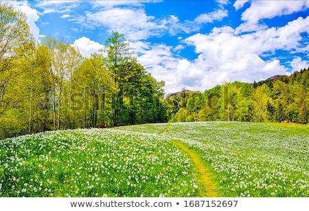 çayır genç kadın yeşil gökyüzü çim kadın Stok fotoğraf © Ariusz
