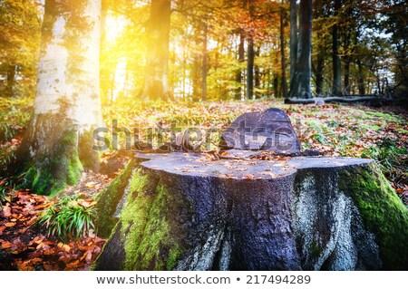 Autumn leaves on  tree stump Stock photo © Valeriy