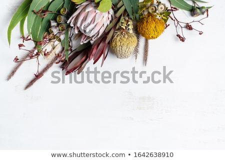 Canguro naturaleza plantilla ilustración textura fondo Foto stock © bluering