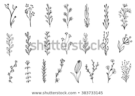Sammlung · Blume · Blätter · Vektor · Hand · gezeichnet - stock foto © marish