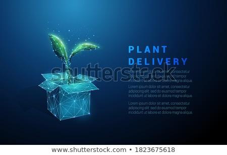 Transporte cuadro planta hoja envases vector Foto stock © pikepicture