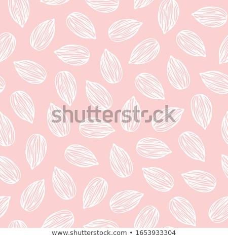 Amandelen vector voeding noten voedsel Stockfoto © Margolana
