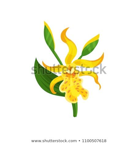 красочный · фон · лет · листьев · тропические · макроса - Сток-фото © koratmember