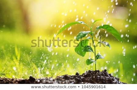 água · fonte · japonês · jardim · bambu · pedra - foto stock © jsnover