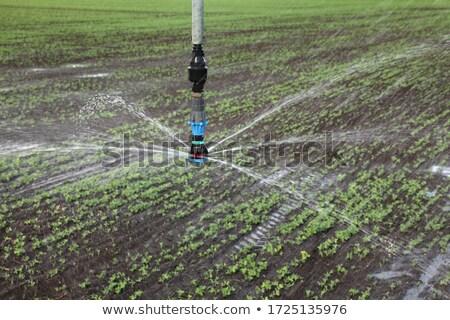 植物 フィールド 水まき かんがい 水 供給 ストックフォト © simazoran