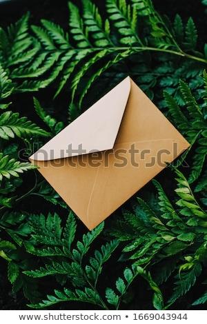 Boríték zöld levelek természet papír kártya levelezés Stock fotó © Anneleven