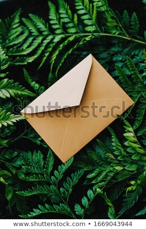 Umschlag grüne Blätter Natur Papier Karte Korrespondenz Stock foto © Anneleven