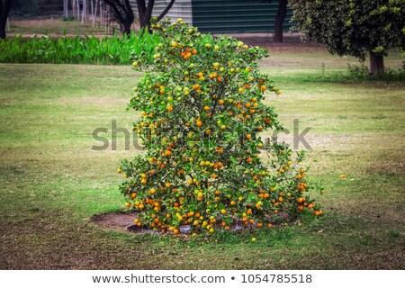 Kicsi fa üveg zöld zselé virág Stock fotó © pinkblue