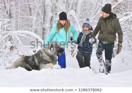 Caucasiano pastor cão neve inverno cabeça Foto stock © Mikko