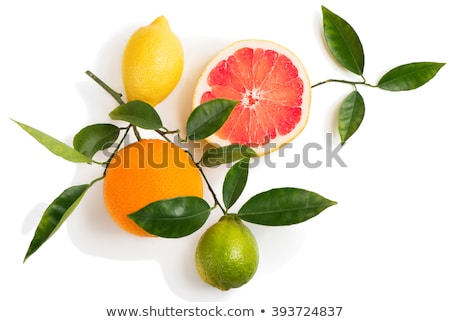 Set of cross a citrus fruits Stock photo © boroda