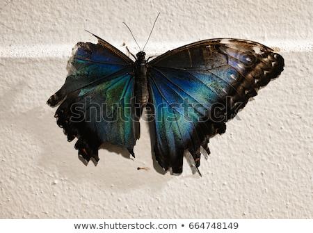 蝶 · 壊れた · 翼 · 花 · 自然 · 夏 - ストックフォト © gant