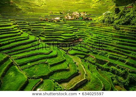 Stok fotoğraf: Pirinç · teras · dağlar · su · ev · gıda