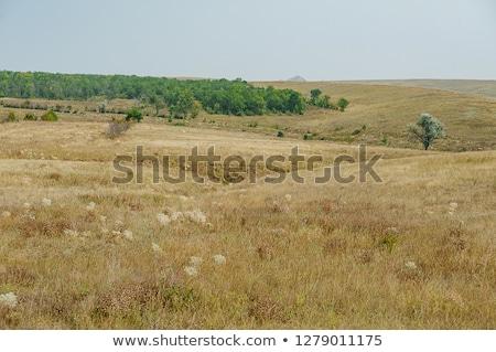 Tree formation on a hill of veldt Stock photo © 3523studio