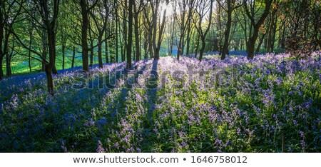 Dışarı odak bitkiler çiçekler bahar Stok fotoğraf © russwitherington