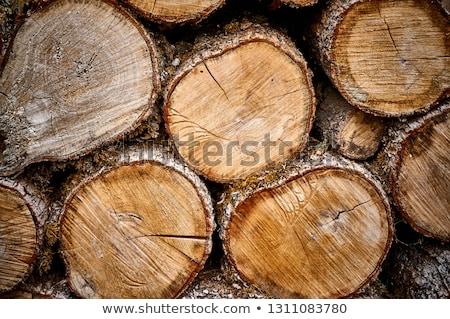 Stack of White Oak Tree Logs Stock photo © mybaitshop