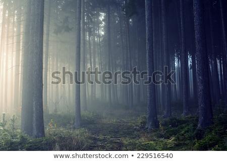ścieżka mgły lasu drzewo drogowego krajobraz Zdjęcia stock © Witthaya