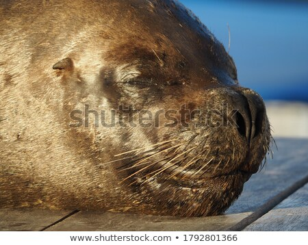Sealion Seascape Stock photo © kwest