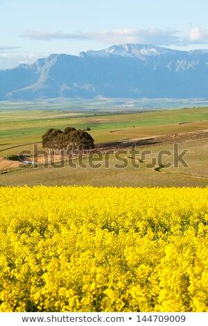 agricultural farmland overlooking snow capped mountain range stock photo © avdveen