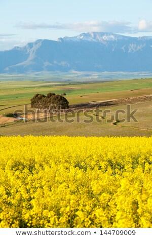 農業の 雪 山 空 ストックフォト © avdveen