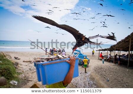 多くの カモメ 盗む 魚 漁師 光 ストックフォト © pxhidalgo