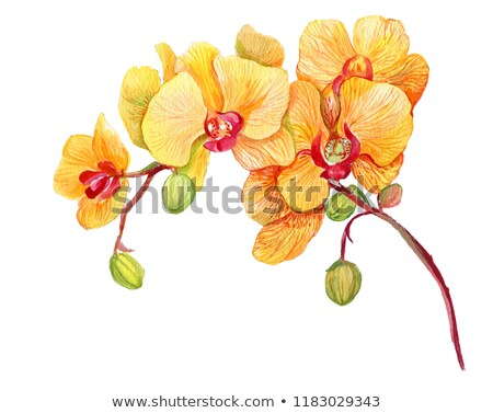 Stock photo: yellow and red orchid flowers