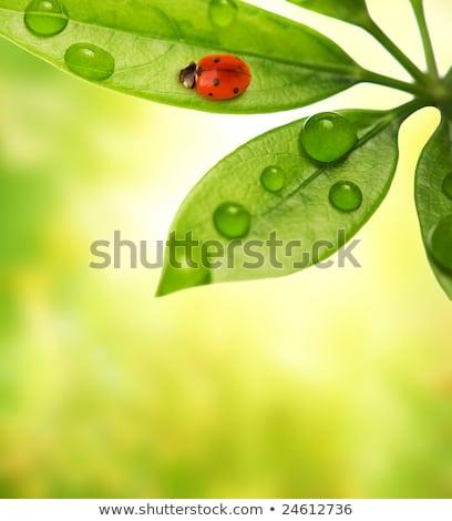 Joaninha sessão folha verde monocromático quadro grama Foto stock © Nejron