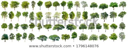 отдельный дерево один лес солнце Сток-фото © THP