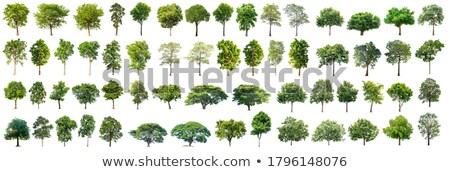 Separate Tree Stock photo © THP