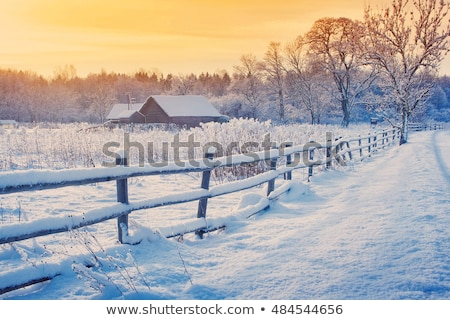 Winter platteland foto presenteert sneeuw bomen Stockfoto © Dermot68