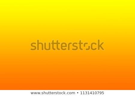 Portakal taze gıda meyve tropikal Stok fotoğraf © vtls